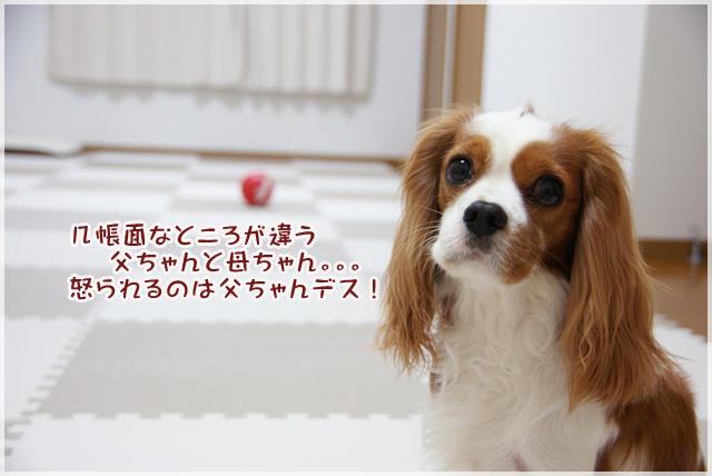 20130123_014.jpg