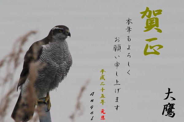 オオタカ(2012281421)①