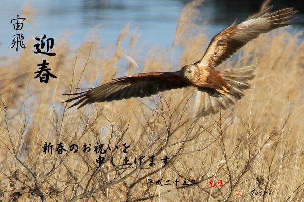 チュウヒ(201212241020)②