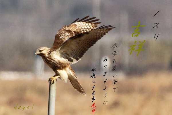 ノスリ(201212168665)