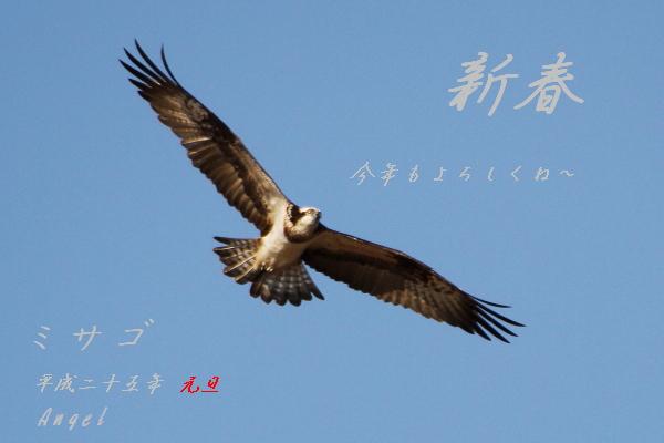 ミサゴ(201212098048)