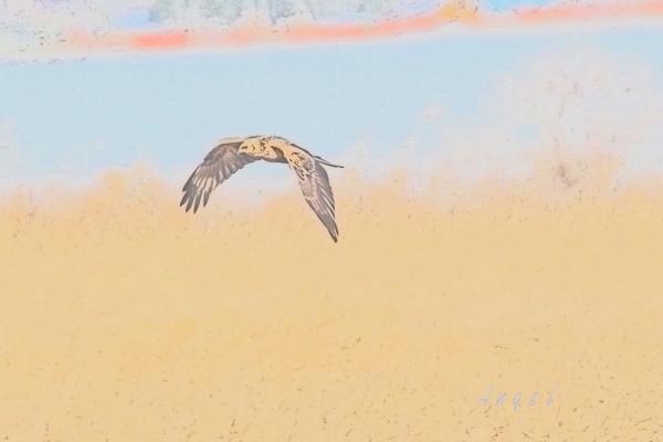 チュウヒ(201301260657)水彩画
