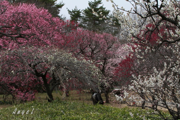 武蔵丘陵森林公園(201303100315)