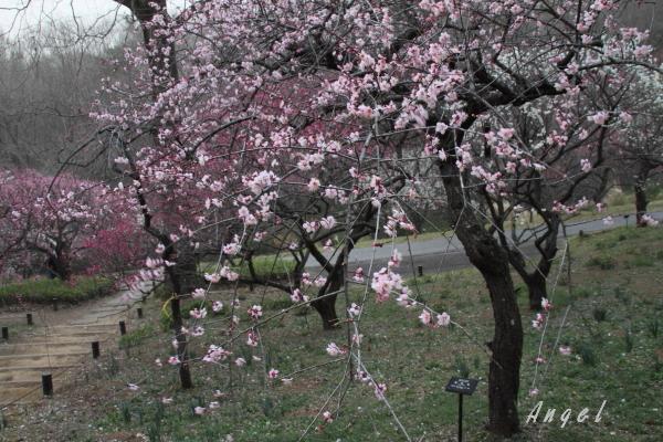 武蔵丘陵森林公園(201303107154)