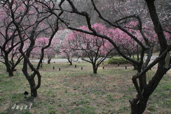 武蔵丘陵森林公園(201303107157)