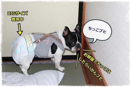 IMG_8012.jpg