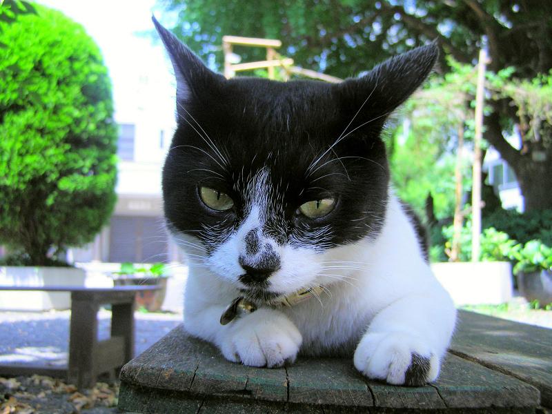 木製ベンチで耳を水平にする猫