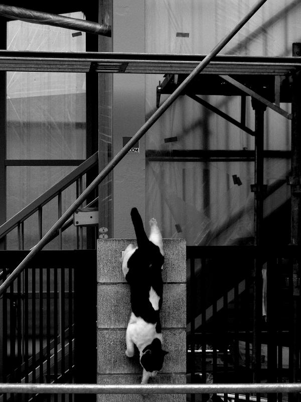 工事中の民家の門柱から飛び降りる猫