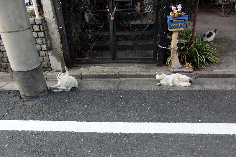 意味不明な行動のネコ