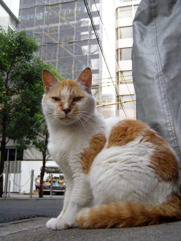 街並みが変わりゆく町の猫