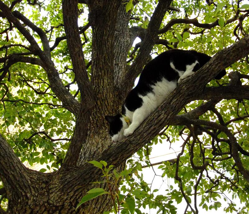 木の上で斜め45度になってるネコ