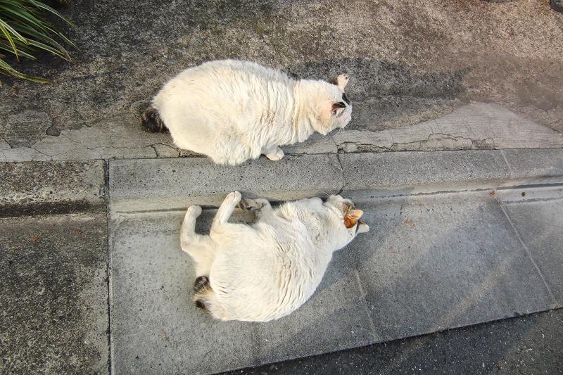 瓜二つなネコ
