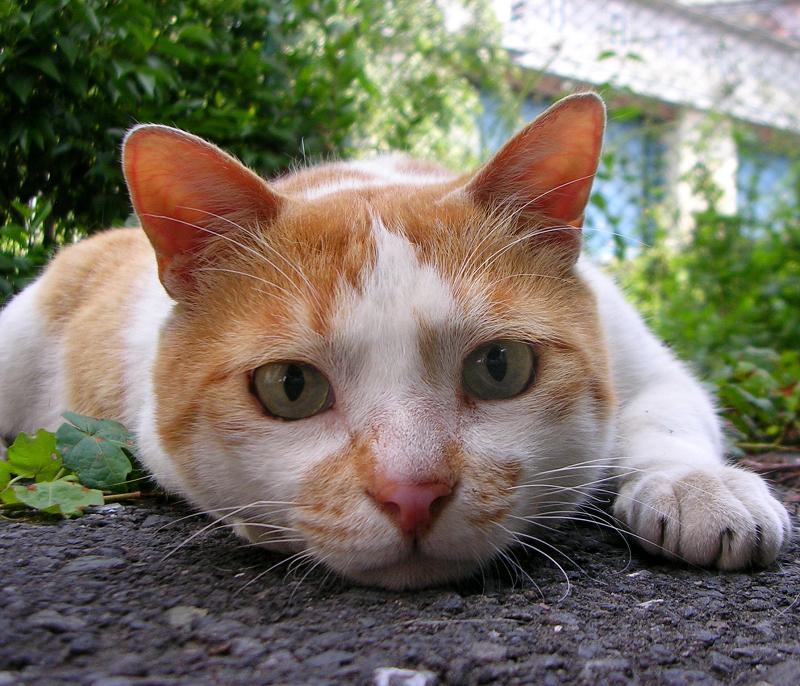 低い位置から私をジーッと見つめる猫