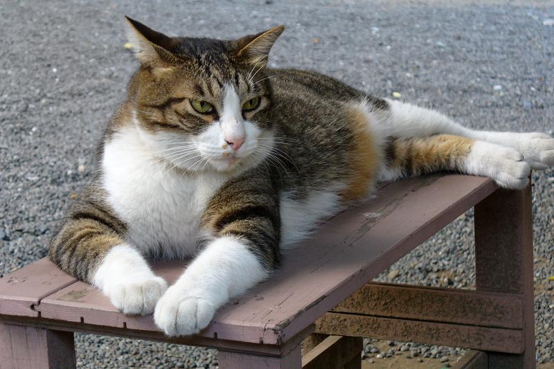 ベンチの上で威風堂々な猫
