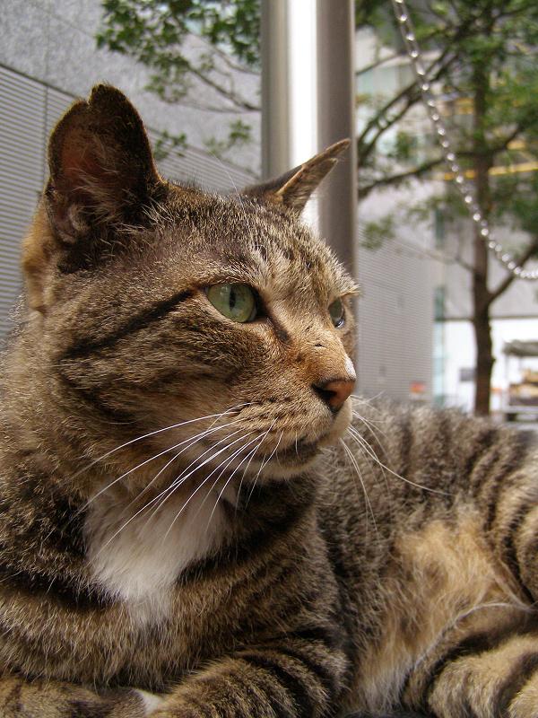興味顔で何かを見てる猫