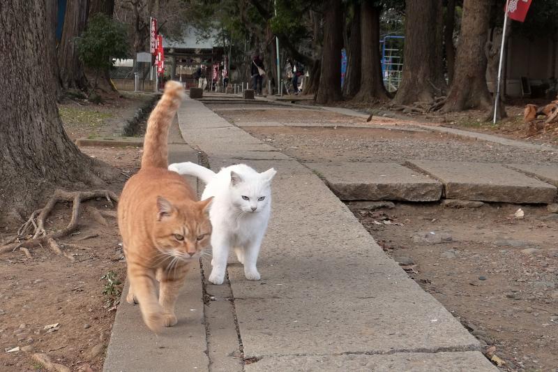 参道を歩き出そうとするネコ