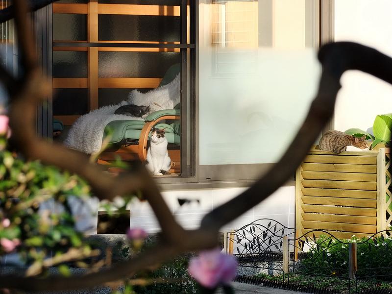 庭から眺めるネコ3匹