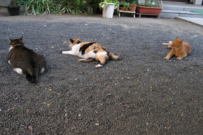 思い思いのポーズの猫たち