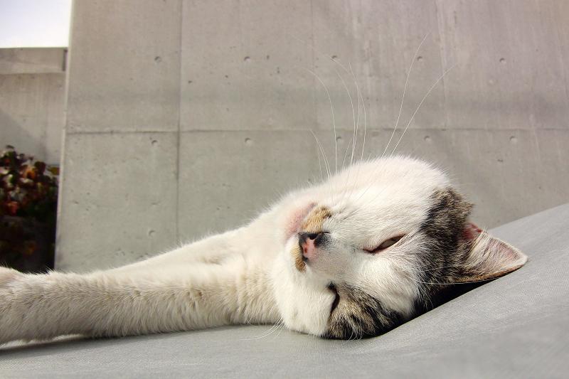 車のシートの上で寝てるネコ