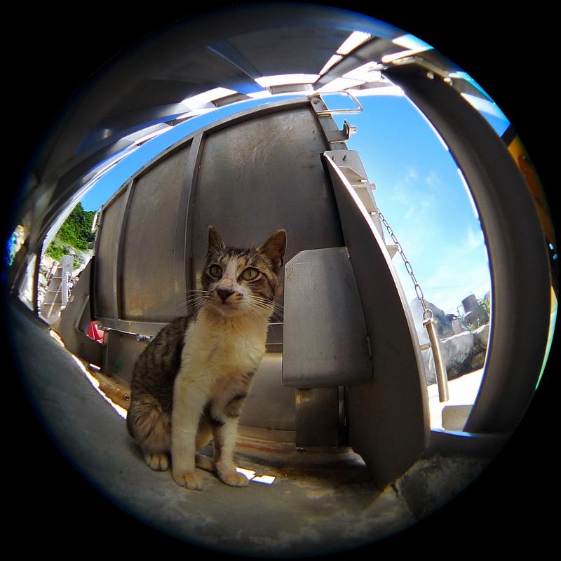 魚眼・Fisheyeのワイコンで写真を撮った猫