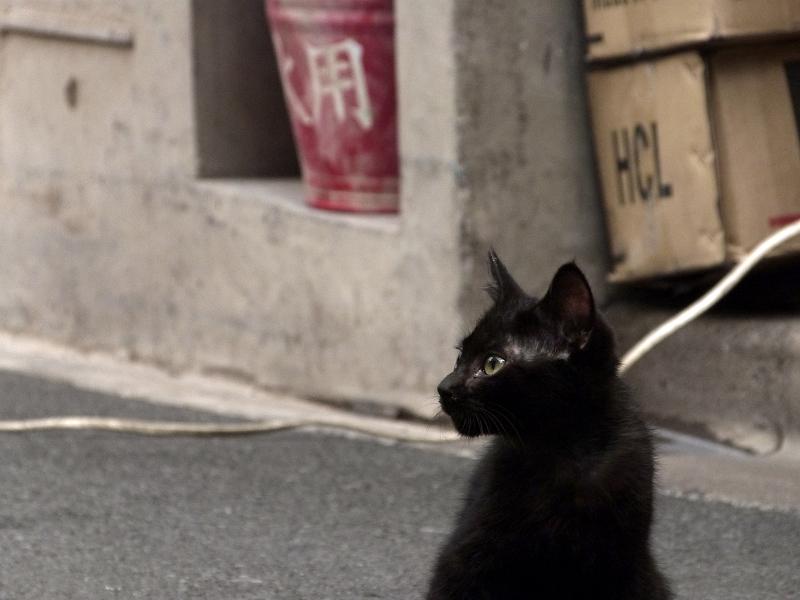 飲み屋街の黒猫の仔猫