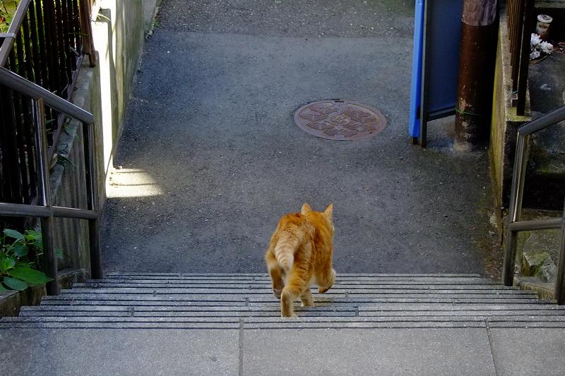 コンクリート階段を下りていくネコ