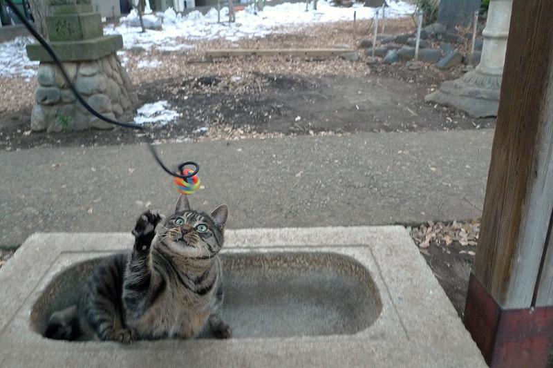 手水場でゴムボールで遊んでくれたネコ