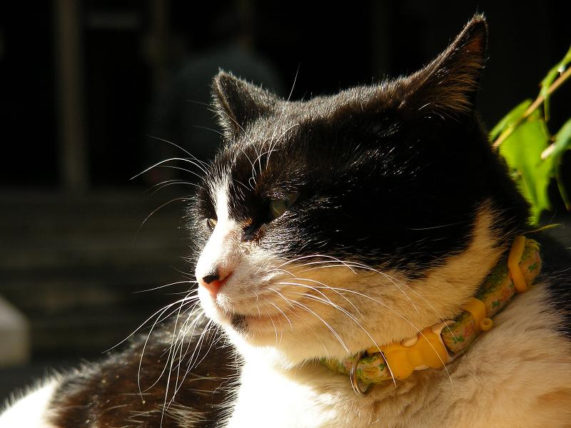 久し振りのS10で撮ったネコ