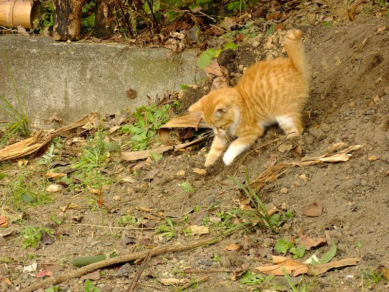 土の上で遊ぶ仔ネコ