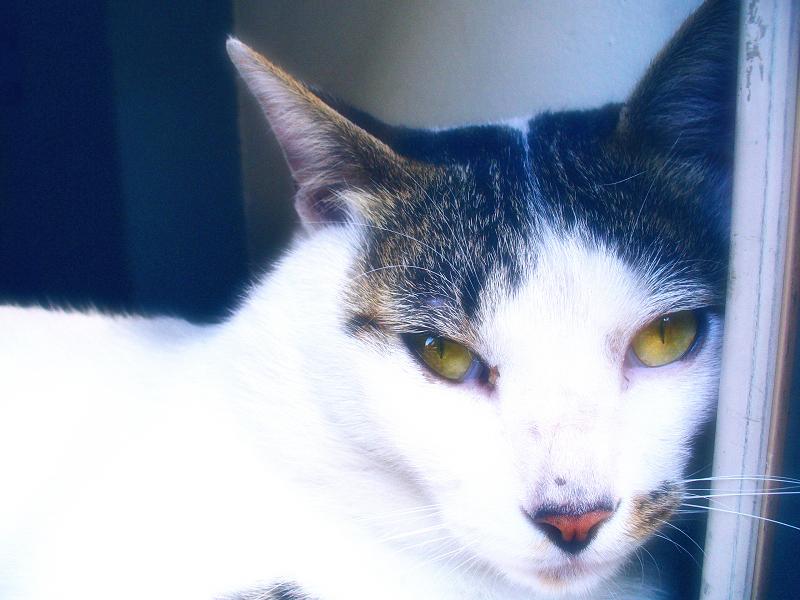 視線が素晴らしい猫をレタッチ