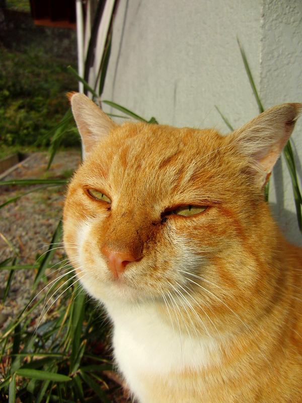 一見呆け顔なネコ