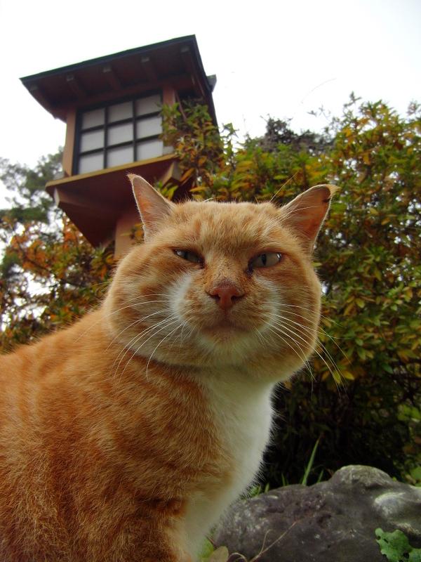 灯籠の下のネコ