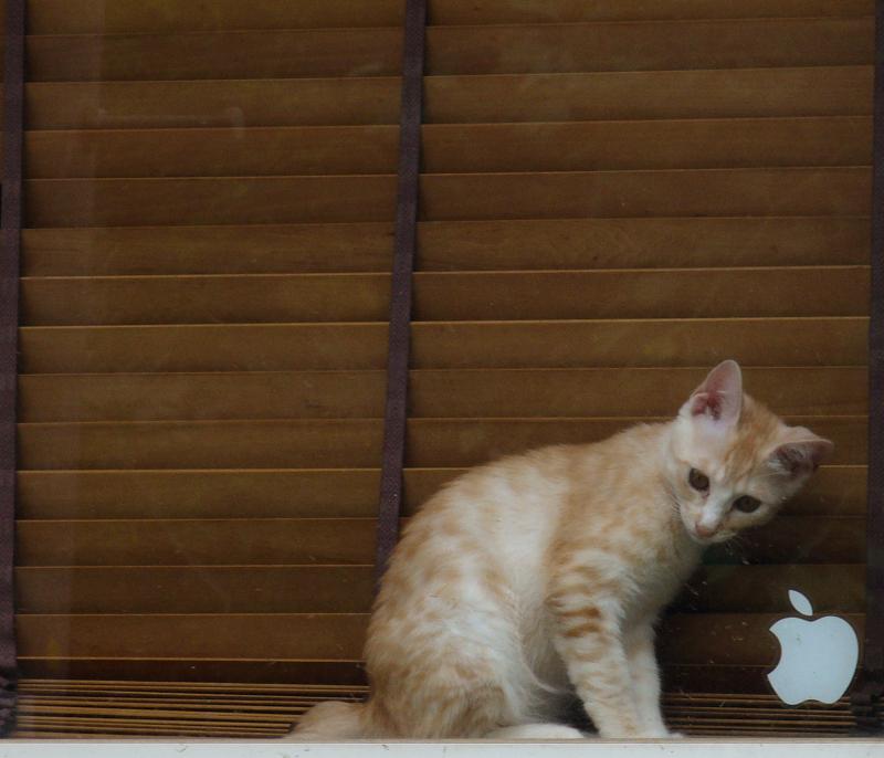 マックのステッカーが貼ってある窓にいた子猫