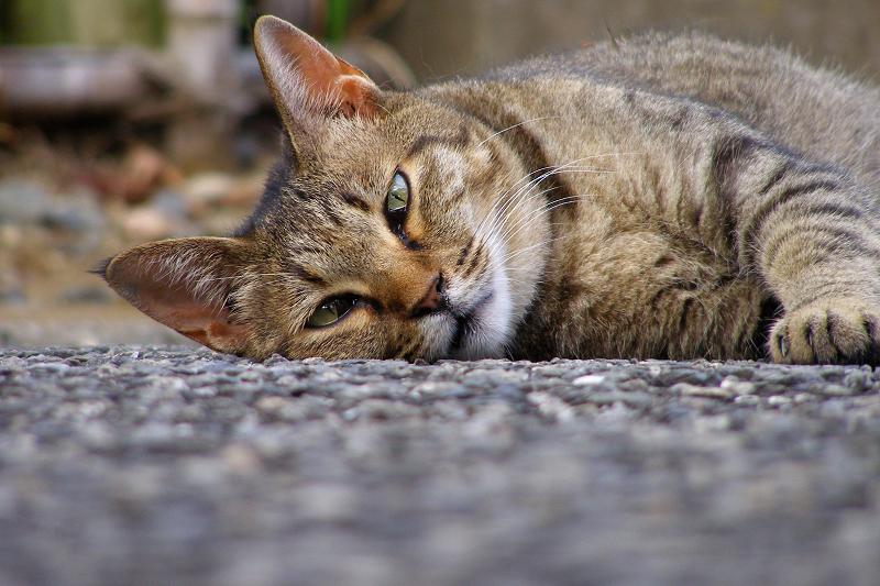 地面に顔を埋める様にして寝てた猫