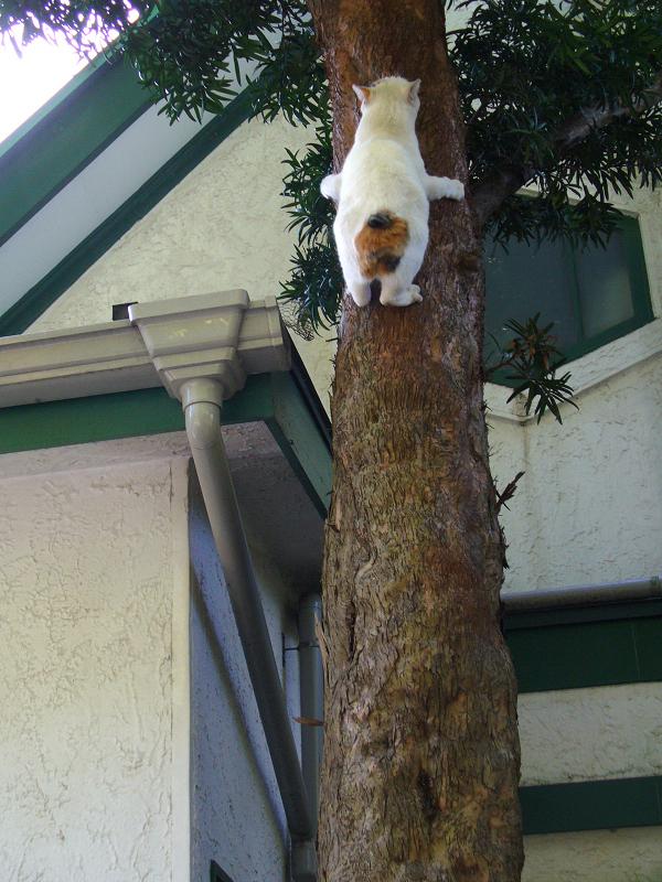 木に登るセミのような猫