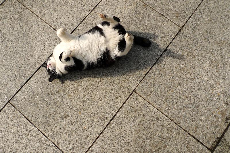 仰向けで手足を上げてるネコ