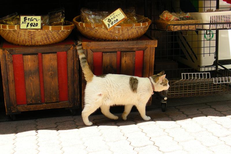 お土産屋さんの前で日陰と日向の間を歩く猫