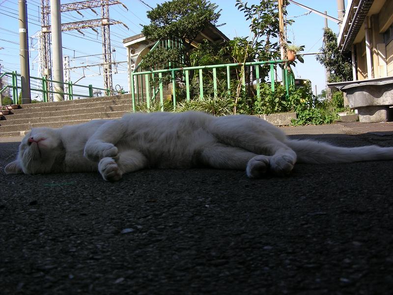 駅舎で寝てる猫