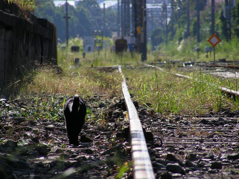 線路脇を歩く猫
