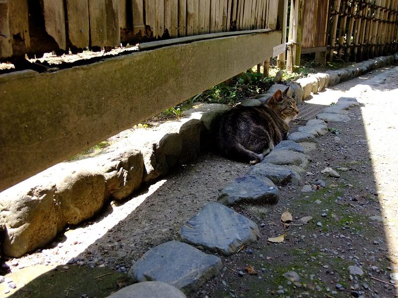 風が通り抜ける塀の下で佇む猫