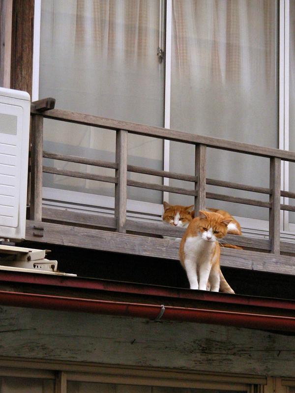 民家の2階に居る猫たち