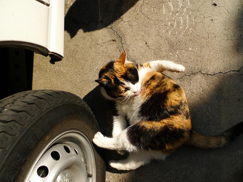 車のタイヤに足をくっつけて毛繕いするネコ