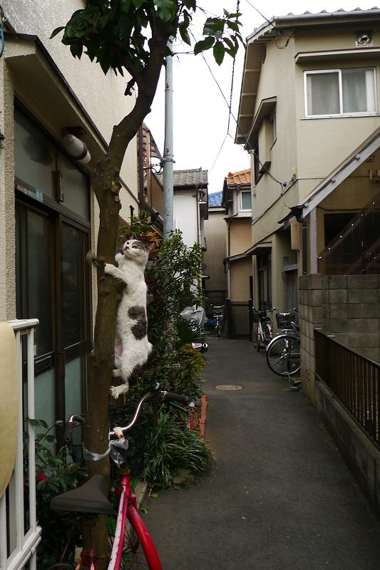 木に登りかけのネコ