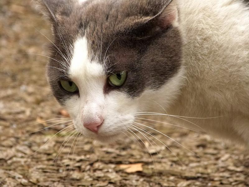 低い位置で猫の顔をアップで写す