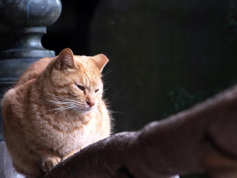 お寺の欄干のネコ