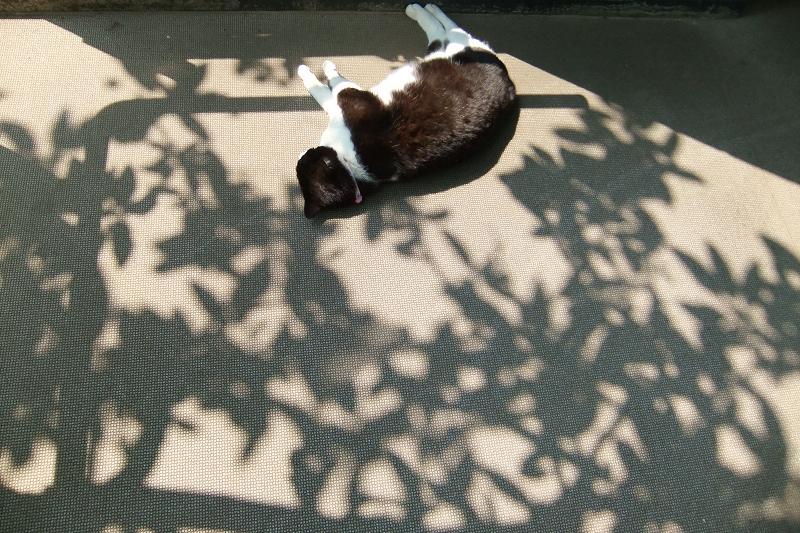木漏れ日の中で寝てる猫