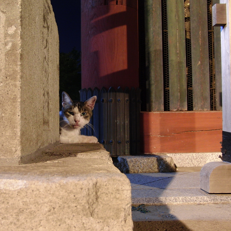 夜の山門の猫