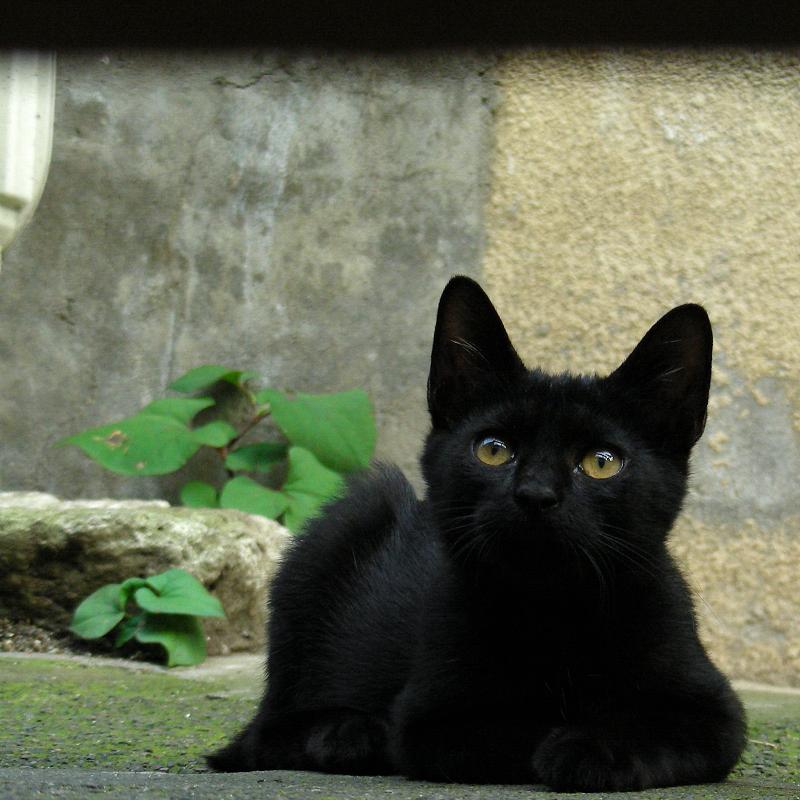 ローアングルで写した黒猫