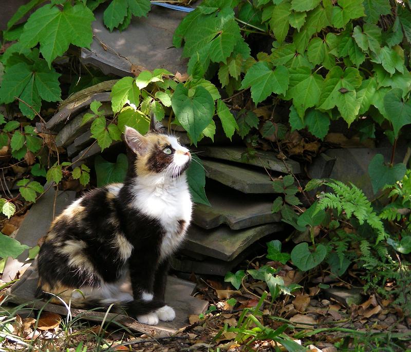 空を真剣に見つめる三毛猫