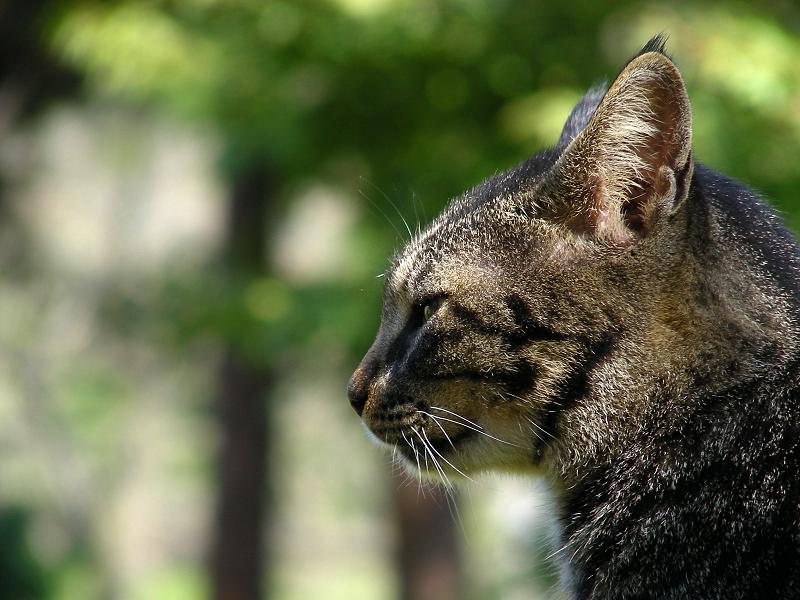 日射しを浴びるネコの横顔